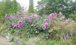 ガーデンのお花の一部です。